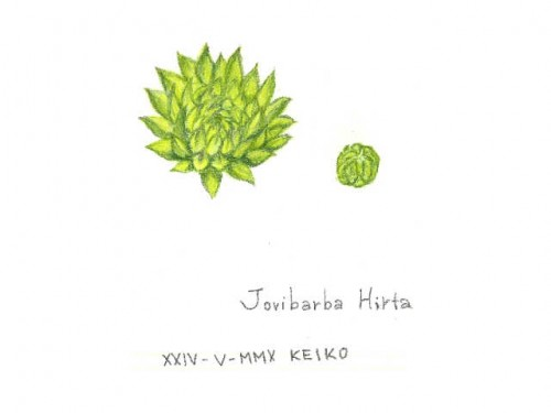 jobibarba