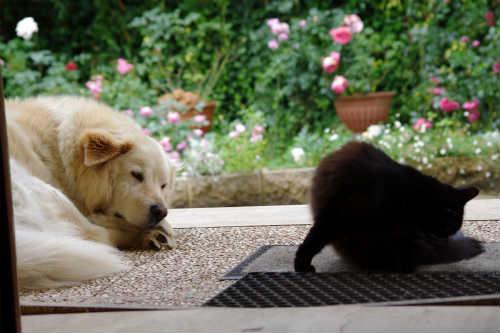 バラと犬と猫
